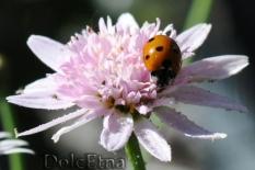 La flora DolcEtna