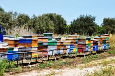 i nostri apiari-1