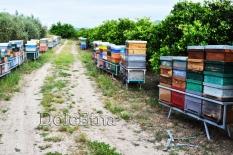 i nostri apiari-2