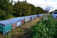 i nostri apiari-6