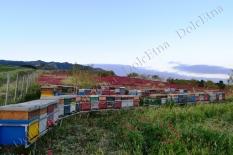 i nostri apiari-7