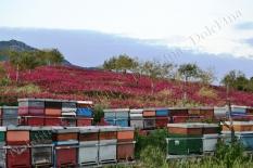 i nostri apiari-8