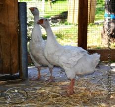 fattoria dolcetna-1-5